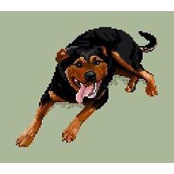 Rottweiler II diagramme noir et blanc