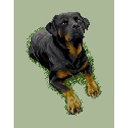 Rottweiler III diagramme couleur