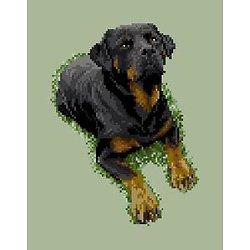 Rottweiler III diagramme noir et blanc