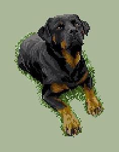 Rottweiler III diagramme noir et blanc .pdf