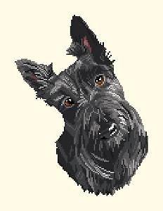 Scottish terrier diagramme couleur
