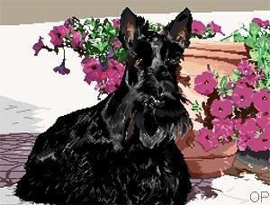 Scottish terrier III diagramme couleur