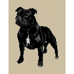 Staffordshire bull terrier diagramme couleur