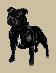 Staffordshire bull terrier diagramme noir et blanc