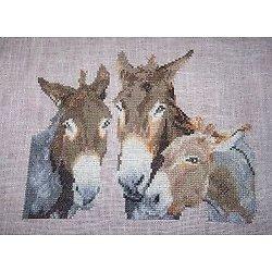 Trio d'ânes diagramme couleur