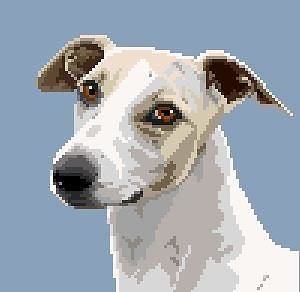 Whippet IV diagramme couleur