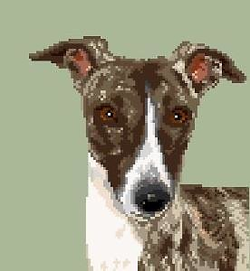 Whippet V diagramme couleur