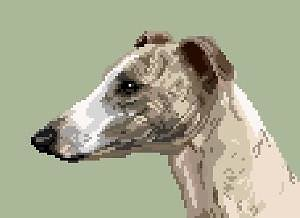 Whippet VIII diagramme couleur