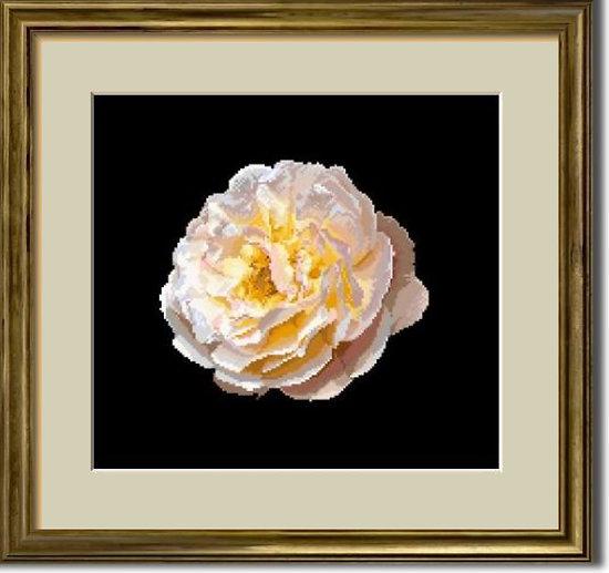 Portrait de rose XVI diagramme noir et blanc