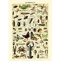 Carnet du Naturaliste 15x21cm