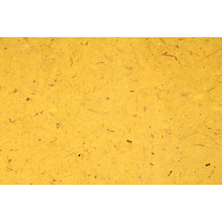 Papier banane - jaune  95x65cm