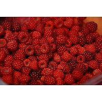 Rubus phoenicolasius - Framboise du Japon
