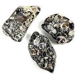Pierre polie en Agate fossile
