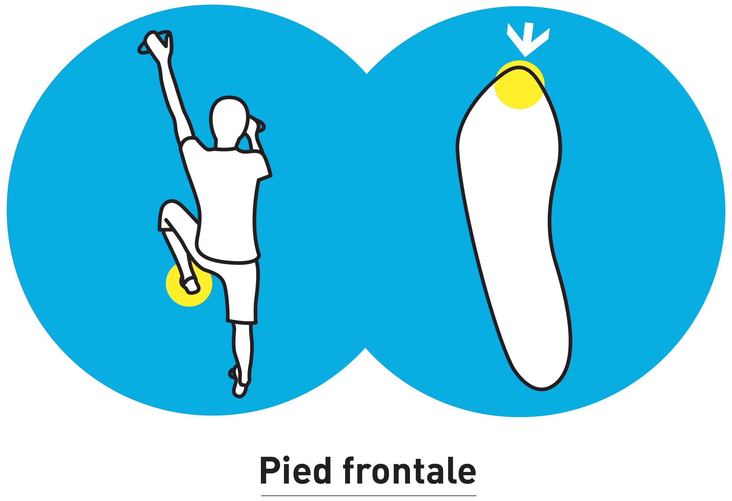 Pied_frontale.jpg
