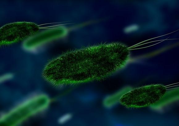etudes-cellules-testicules-favorisent-fertilite-masculine.jpg