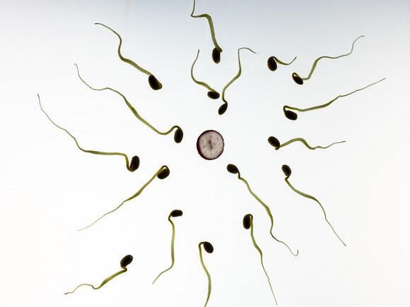 fertilite-masculine-en-baisse-pays-occidentaux.jpg