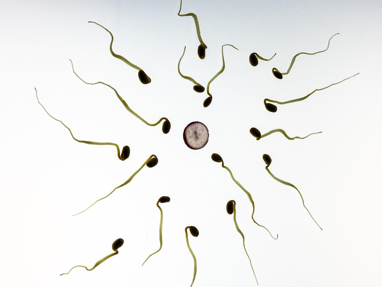 spermatozoides.jpg