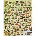 Poster - paddenstoelen