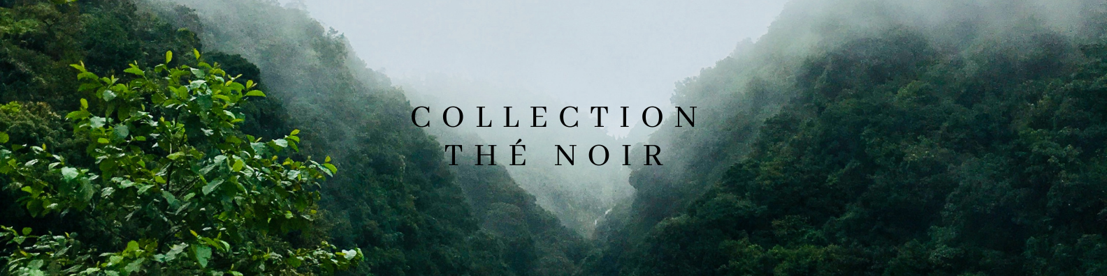 Collection_The_Noir.png