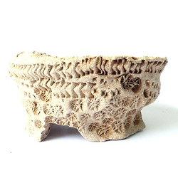 """Pot """"gravé"""" pour bonsaï mame ou shohin, cactus ou plante succulente ou caudex"""