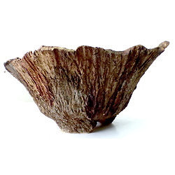 Pot pour bonsaï mame ou shohin cascade, cactus , caudex ou plante succulente