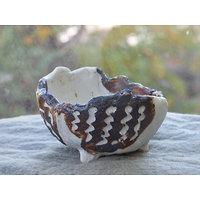 Pot en porcelaine pour bonsaï mame, cactus ou plante succulente ou d'accompagnement