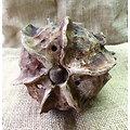 """Pot """"coquille"""" (crescent pot) pour bonsï, cactus, plante succulente ou à caudex"""
