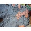 Pot pour bonsaï ou composition de cactus ou de plante succulente