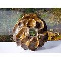 Pot pour bonsaï mame, kusamono, plante d'accent, cactus ou plante succulente