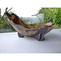 """Pot """"coupe"""" pour bonsaï, cactus ou plante succulente"""