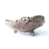 Pot pour bonsaï Shohin, cactus ou plante succulente ou à caudex