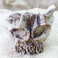 Pot sculpture (crâne) pour bonsaï mame, cactus succulent, caudex ou décoration
