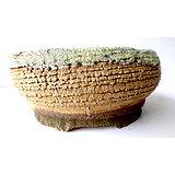 Pot pour bonsaï, cactus ou plante succulentes