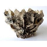 """Pot """"crâne"""" pour bonsaï shihin, cactus, caudex ou plante succulente"""