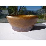 Pot pour bonsaï shohin, kusamono, cactus ou plante succulente