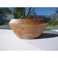 Pot rond pour bonsaï, cactus, succulente