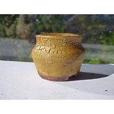 Pot pour kusamono; cactus; succulente