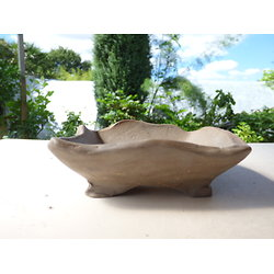 Pot pour bonsaï, cactus ou plante succulente