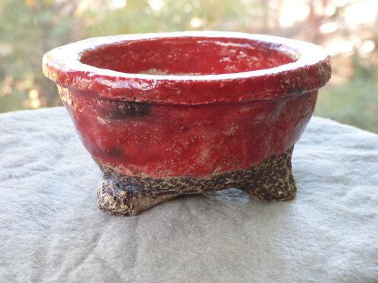 Pot pour cactus, plante succulente ou d'accompagnement ou cactus mame