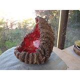 Pot coquille pour bonsaï, cactus plante succulente ou autre