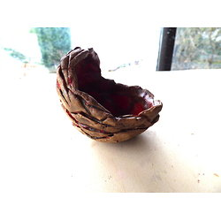 Pot coquille pour bonsaï, plante succulente ou autre, ou cactus