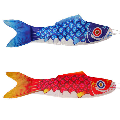 Carpe koi for Carpe koi bleu